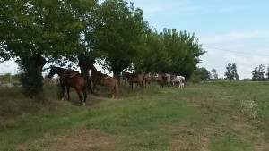 Arrivo a cavallo
